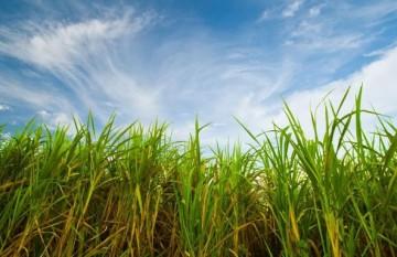 Aos 39 anos, programa do etanol ainda continua sem regras claras